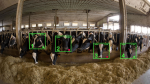 Cainthus - AI and Face Recognition in Dairy Farms